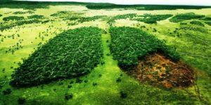 Почему ответственное отношение к природе мы называем истинно человеческим